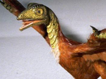 Thuyết tiến hóa: Sự thật hay sản phẩm của con người?
