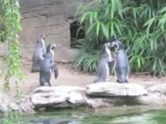 Chim cánh cụt bắt bướm