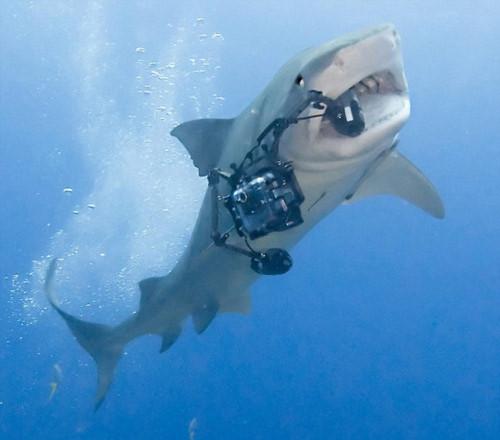"Cá mập ""cướp"" camera của nhiếp ảnh gia"
