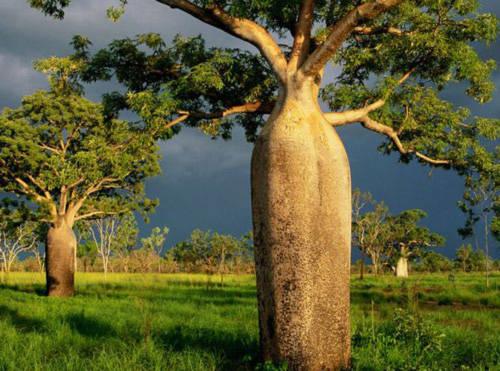 Cảnh đẹp mê hồn ở Australia - Tin180.com (Ảnh 7)
