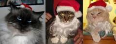 Mèo ngộ nghĩnh trong trang phục Noel
