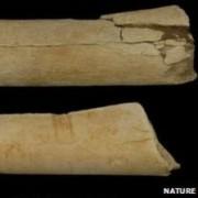 Phát hiện dụng cụ ăn thịt cách đây 3,5 triệu năm