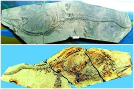 95% hóa thạch ở bảo tàng Trung Quốc là giả