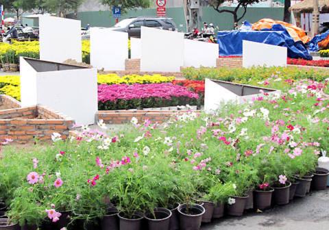 Những chậu hoa đủ màu sắc được mang từ nhiều nơi về đây để chuẩn bị cho việc tạo hình.