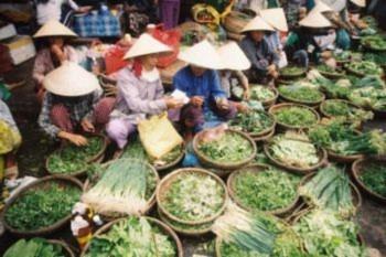 Miền Bắc và miền Trung Việt Nam – Vùng đất của sự chuyển mình và chuyển đổi