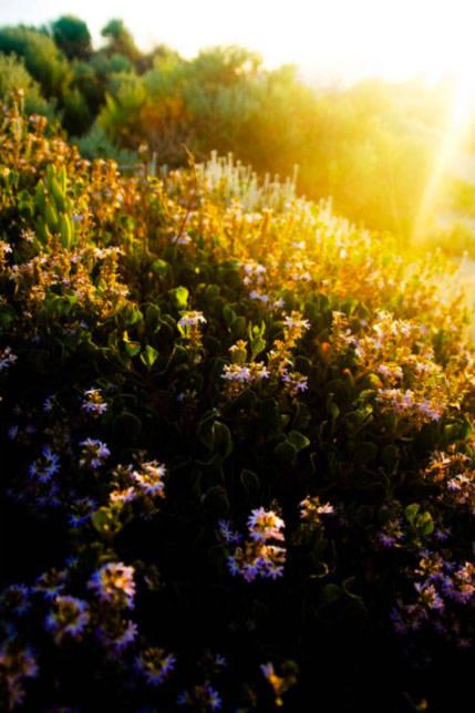 Sự sống nảy lên từ đất cát bỏng rát, vươn lên bằng ánh mặt trời chói chang khắc nghiệt