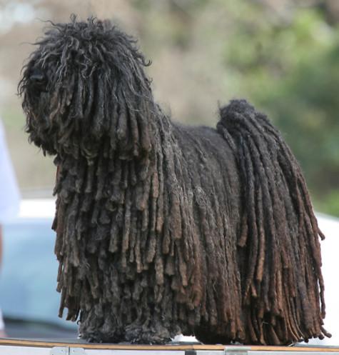 10 loài chó kỳ lạ nhất hành tinh