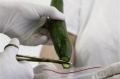 Chưa tìm ra nguyên nhân E.coli mang độc tính mạnh