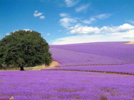 Đẹp hút hồn những cánh đồng hoa - 3