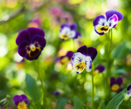 Đẹp hút hồn những cánh đồng hoa - 4