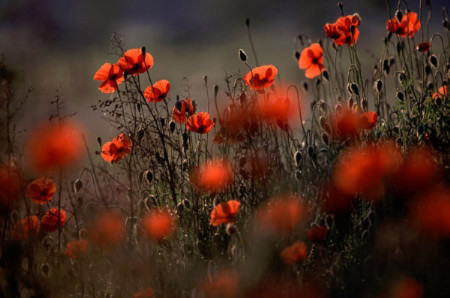 Đẹp hút hồn những cánh đồng hoa - 5