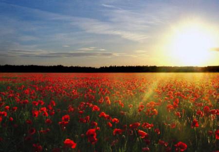 Đẹp hút hồn những cánh đồng hoa - 8
