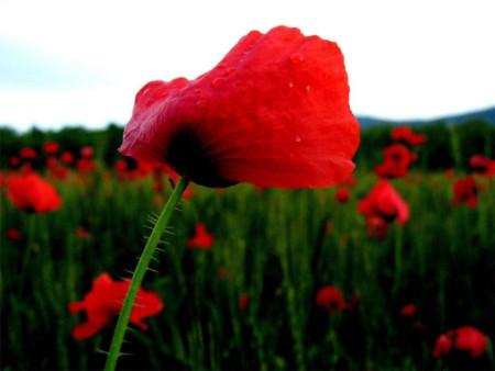 Đẹp hút hồn những cánh đồng hoa - 9