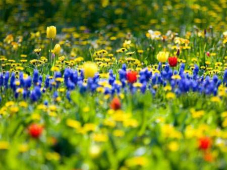 Đẹp hút hồn những cánh đồng hoa - 12