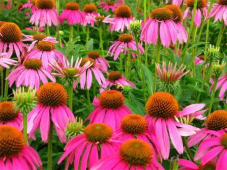 Đẹp hút hồn những cánh đồng hoa - 6