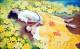 """""""Hoa sen vàng"""" miêu tả câu chuyện về một học viên Pháp Luân Công và đứa con trai của cô bị tra tấn đến chết sau khi cảnh sát Trung Quốc bắt cóc họ. Đây là câu chuyện có thực đã xảy ra tại Trung Quốc vào năm 2000. Cô Vương Lệ Huyên (Wang Lixuan), 27 tuổi, là một học viên Pháp Luân Công sống tại thôn Nam Hoành, trấn Tê Hà Tự Khẩu, thành phố Yên Đài, tỉnh Sơn Đông. Con trai cô, Mạnh Hạo, mới chưa đầy 8 tháng tuổi khi em bị giết hại. Sau khi Giang Trạch Dân bắt đầu bức hại Pháp Luân Công vào ngày 20 tháng 7 năm 1999, cô Vương đã tới Bắc Kinh để thỉnh nguyện phục hồi danh dự cho Pháp Luân Công 8 lần, trong đó 3 lần là khi cô mang thai, và 2 lần là đi cùng đứa bé. Ngày 21 tháng 10 năm 2000, cảnh sát đã bắt cô và con trai cô trong khi họ đang trên đường tới Bắc Kinh. Ngày 7 tháng 11 năm 2000, cảnh sát đã bắt cóc cô Vương và con trai cô khi họ đang giảng chân tướng về Pháp Luân Công trên quảng trường Thiên An Môn. Vì cô Vương Lệ Huyên từng làm việc cho một công ty ở Khu phát triển Yên Đài, một cảnh sát có họ là Mưu đến từ Cục Công an Khu phát triển Yên Đài đã đưa họ tới văn phòng đại diện Khu phát triển Yên Đài ở Bắc Kinh, tọa lạc tại tầng 18, Trung tâm Hoa Úc và giữ họ dưới sự giám sát. Khoảng 4 giờ chiều ngày hôm ấy, cô Vương và đứa con trai nhỏ của cô được báo cáo là đã ngã từ ban công tầng 18 xuống đất. Họ chết ngay lập tức. Đây quả thực là một cảnh tượng bi thảm.  Mẹ của cô Vương Lệ Huyên, bà Lý Tú Hương, cũng là một học viên Pháp Luân Công. Khi chồng bà nhận được giấy báo tử và đến Bắc Kinh cùng một số thân nhân, họ đã tìm thấy thi thể của cô và đứa con trai bị đông cứng lại trên nền đất.  Theo khám nghiệm tử thi: cổ và xương khuỷu của cô đã bị gẫy, đầu cô bị dập và có một cây kim mắc ở vùng thắt lưng cô. Có hai vết thâm tím lớn ở mắt cá chân trên thi thể đứa bé. Có hai vệt đen và xanh trên đầu bé, và máu chảy ra từ mũi em. Người ta suy luận rằng các vết bầm có thể đã được gây ra khi những kẻ tra tấn còng chân bé Mạnh Hạo [mới chưa đầy 8 tháng tuổi] và treo ngược đầu """