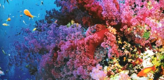 """Mê đắm 10 """"thiên đường sắc màu"""" rực rỡ nhất thế giới - 6"""