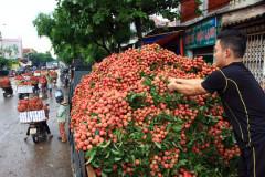 Người trồng hoa quả cần cảnh giác trước các chiêu trò của thương lái Trung Quốc. Ảnh: HẢI NGUYỄN - laodong