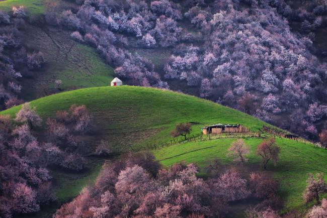 Thung lũng hoa mai hương sắc đẹp đến cạn lời ở Tân Cương - Ảnh 5.
