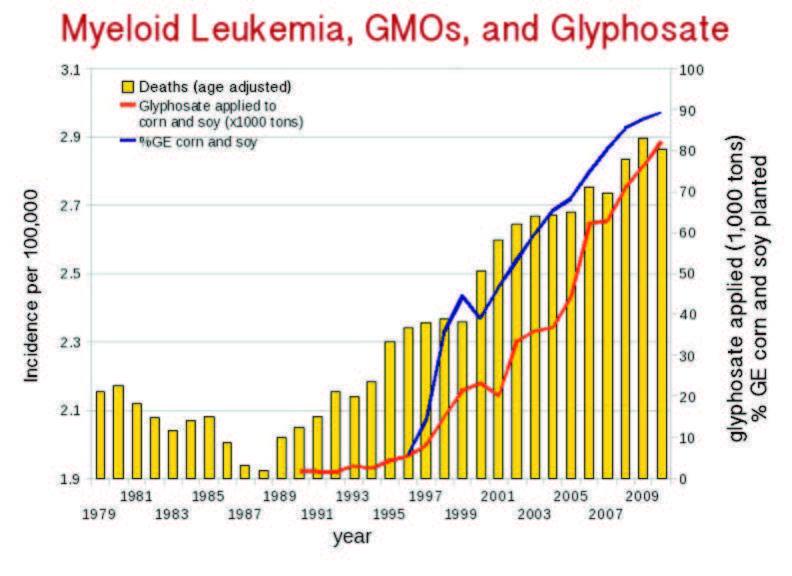 Bệnh bạch cầu tủy ở Mỹ gia tăng nhanh kể từ khi GMO được đưa vào sử dụng năm 1996 và glyphosate được phun tràn lan (nguồn: responsibletechnology.org)