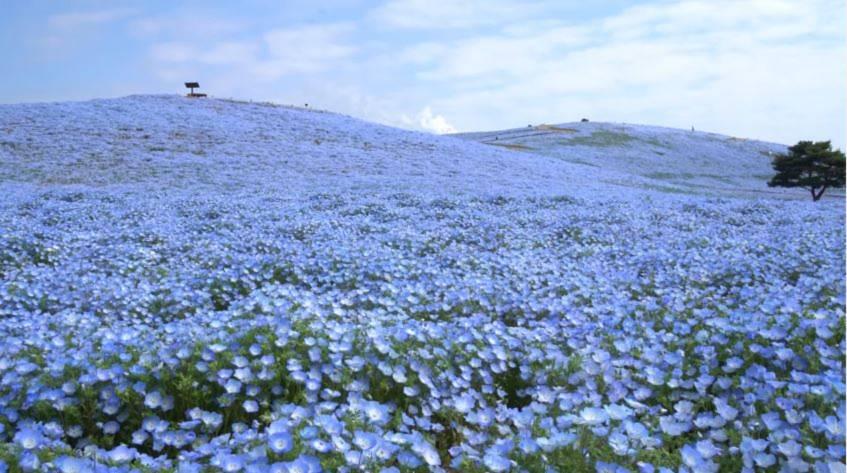 hoa mat xanh