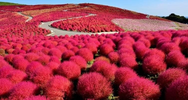 Công viên bờ biển Hitachi