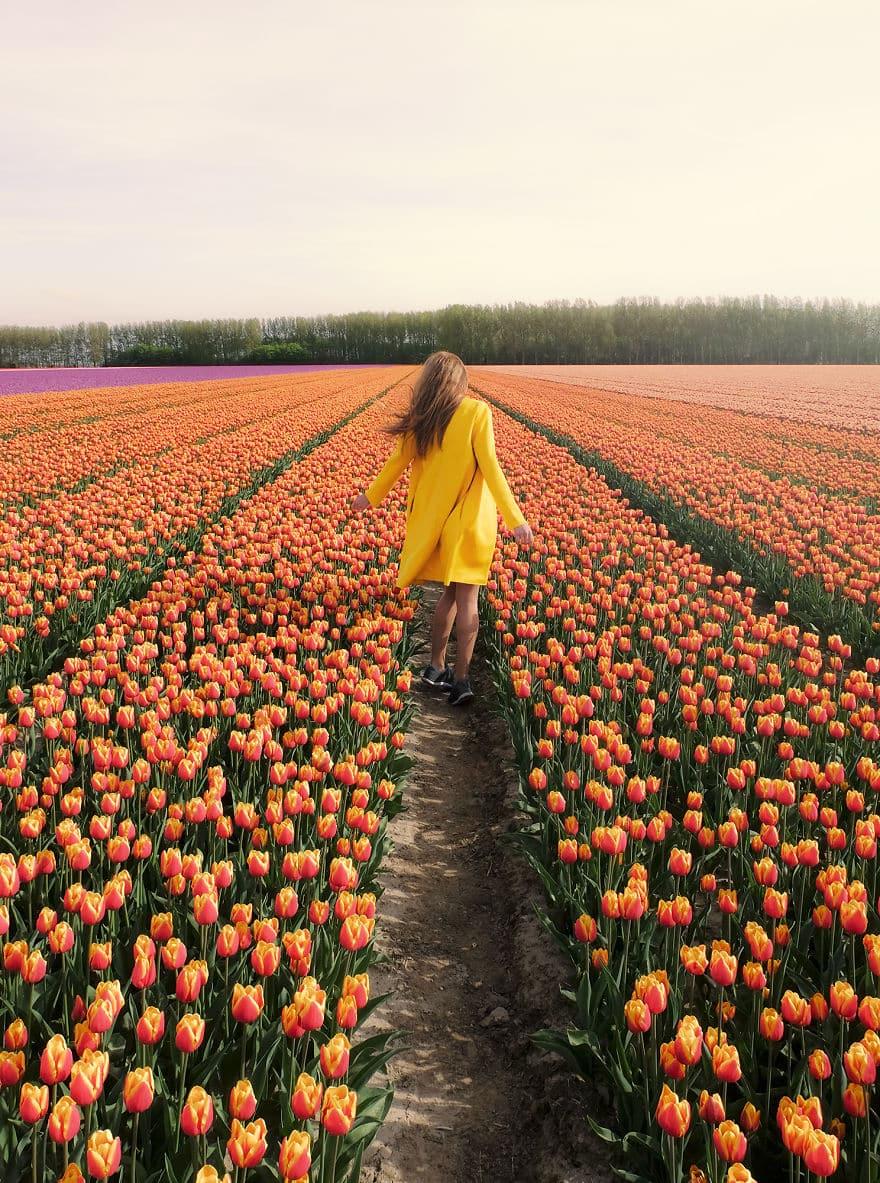 tulip-7